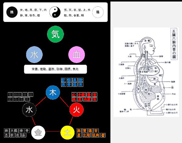 陰陽五行説、臓腑経絡説の画像